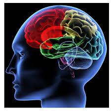 Vai trò của canxi trong hệ thần kinh